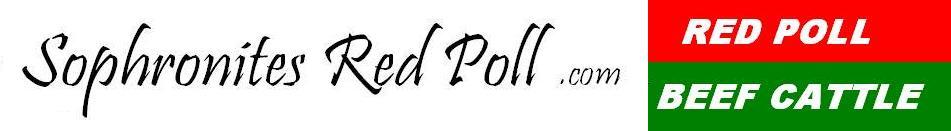 Sophronites Red Poll